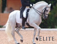 Elite - FEI dressage horses, Grand Prix dressage horses, Calificado stallions, Champion show winners and rare horses