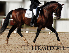 Intermediate - From lady's schoolmasters to dressage horses from Novice to Advanced Medium level