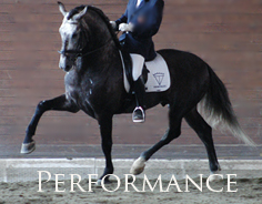 Performance - Spanish Horses which are or have the ability to be competition Sporthorses