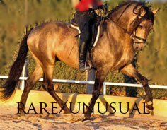Rare/Special Spanish Horses - hard to find